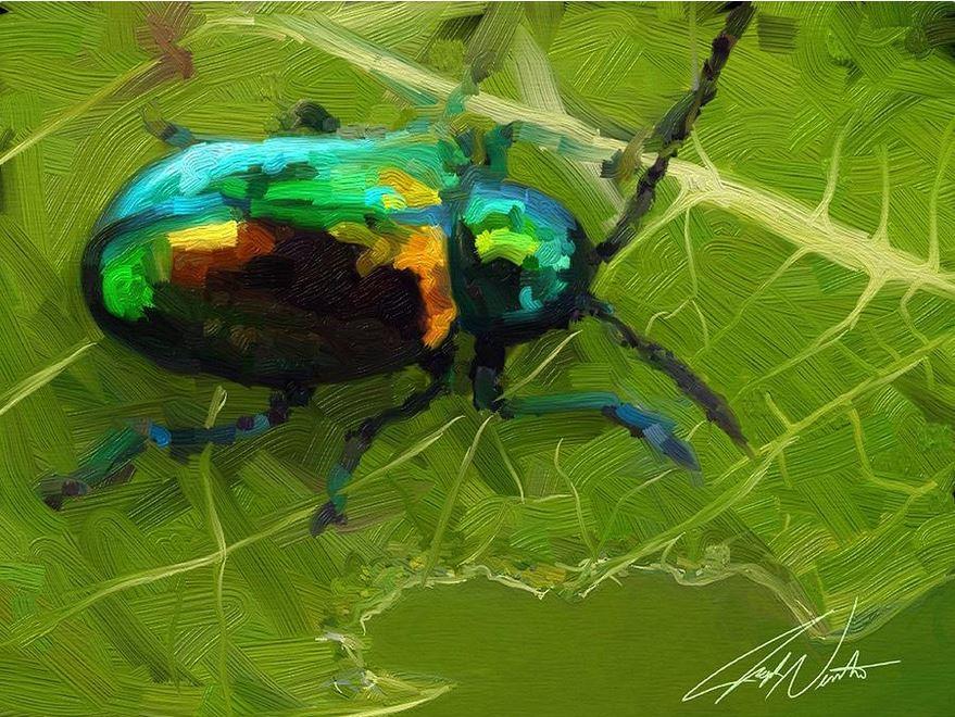 'Beetle'