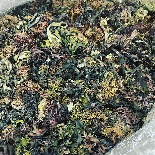 Raw Chondrus Crispus Irish Moss