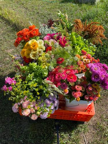 Market Harvest.png