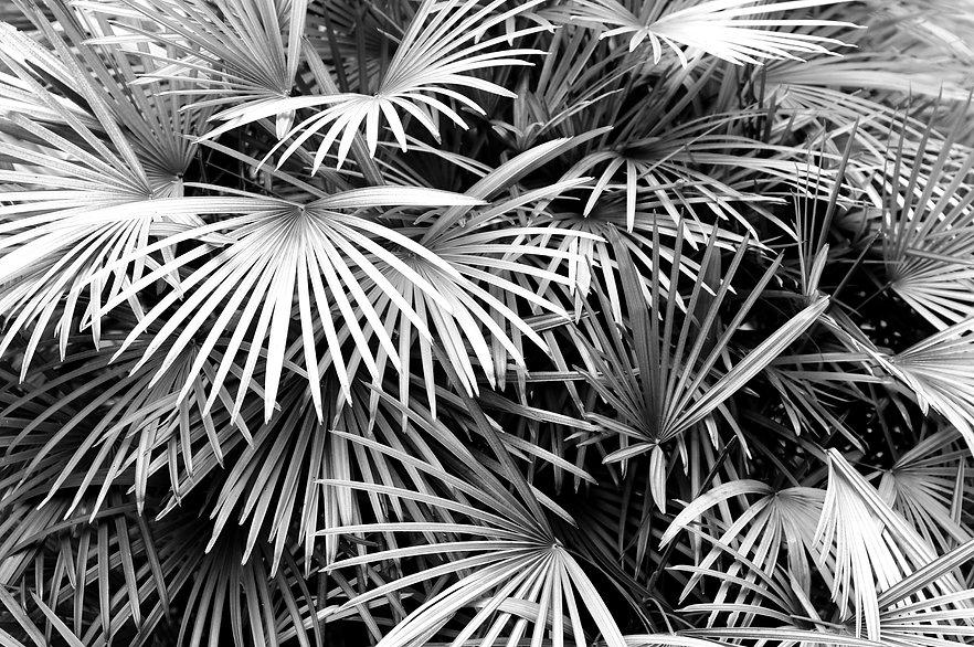 Luscious Palm Leaves_edited.jpg