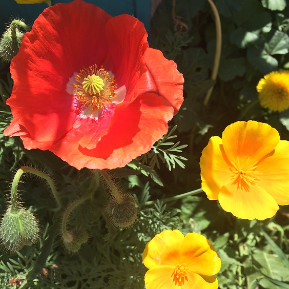 Virtual Medicinal and Edible Plant Walk