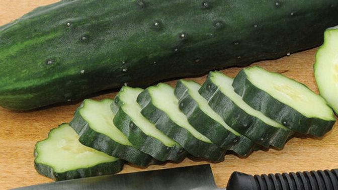 Plant Start Cucumber, Slicers