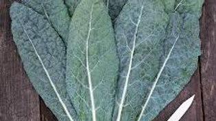 Tocano Kale