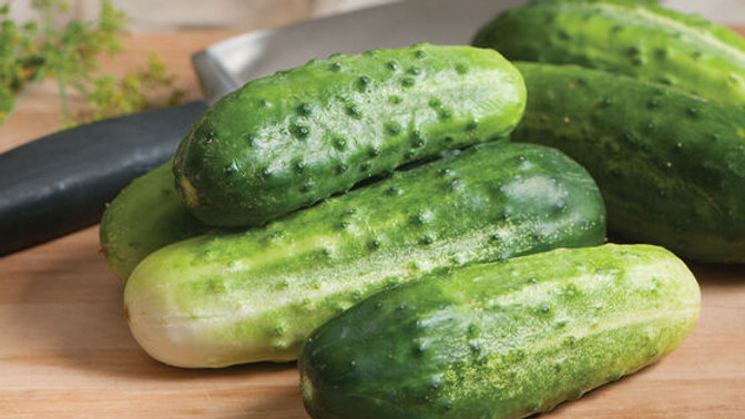 Plant Start Cucumber, Pickling
