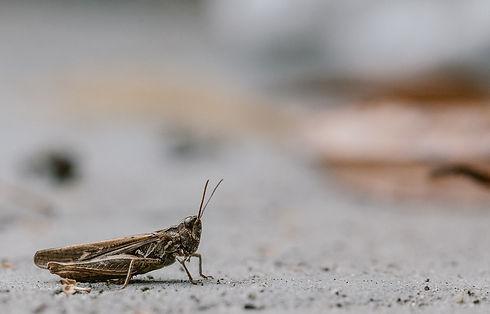 cricket-1287428_1280.jpg