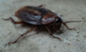 cockroach-70295_1280.jpg