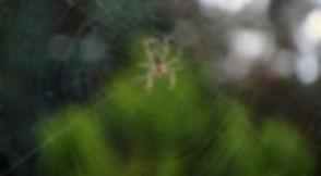 spider-3658386_1280.jpg