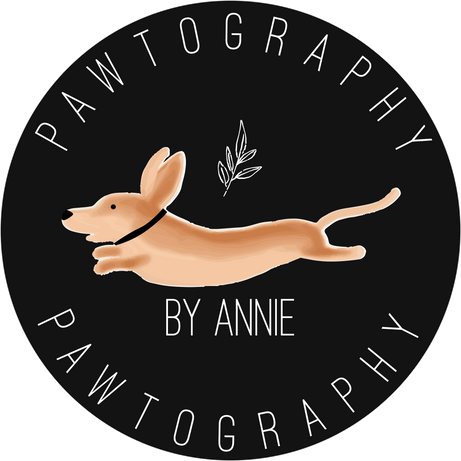 Pawtography by Annie - Logo