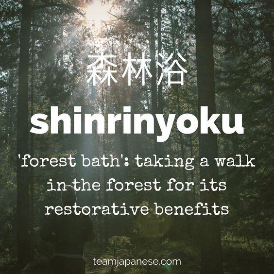 Shinrinyoku, Forest Bathing, The Image Tree Blog, Feeling The Winter Blues?