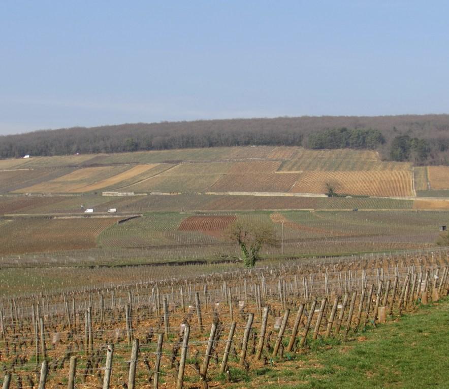Precious parcels of Burgundy soil.