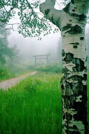 aspen-gate-mist - Copy.jpg