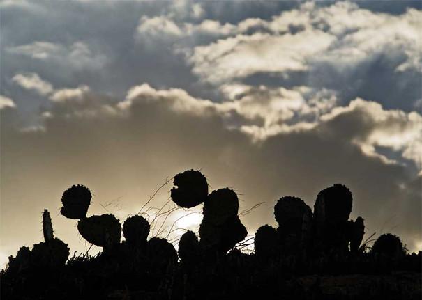 cactus-sunset.jpg