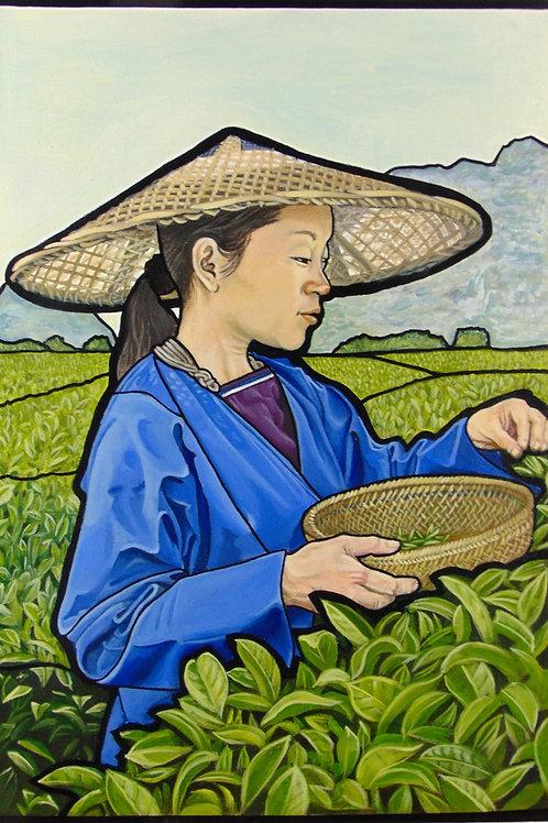 Xi'an Tea Picker