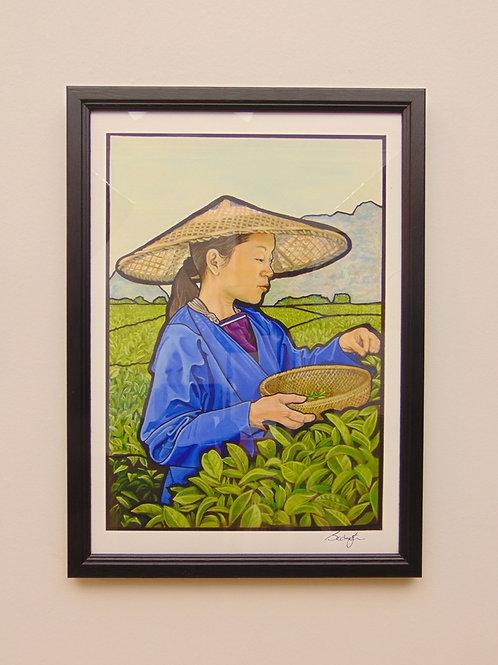 XI'AN TEA PICKER - COLLECTOR PRINT