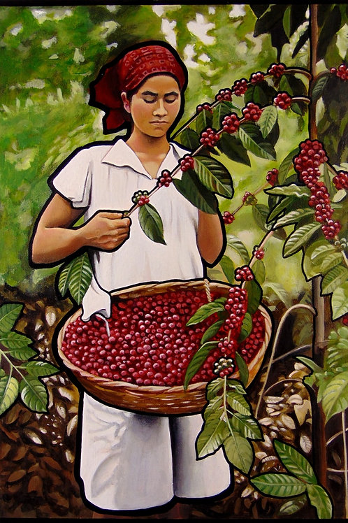 EL Salvador Coffee Picker