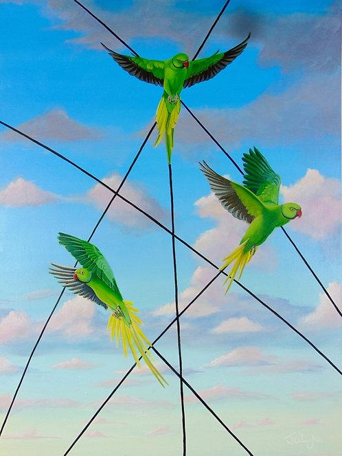 Parakeets Of Kensington
