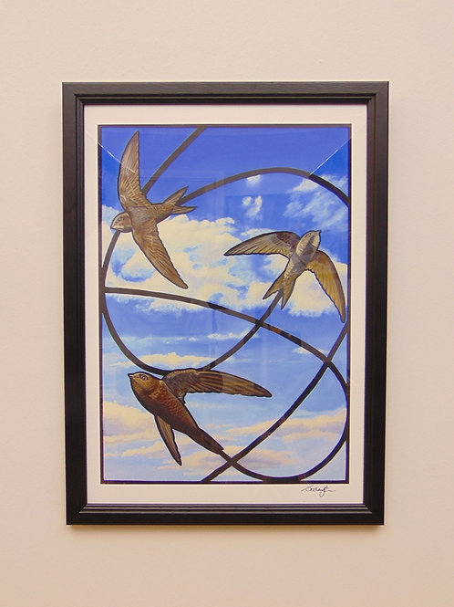 SWIFTS IN FLIGHT - COLLECTOR PRINT