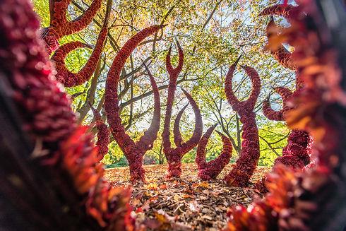 Tom De Houwer Japanese Garden00024.jpg