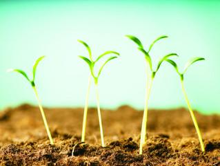 Agricultura Urbana. Una Alternativa para la Producción de Alimentos Libres de Agroquímicos en la Ciu