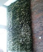 Giardini_verticali_artificiali   (13).pn