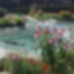 Rocks_Gardens_Design.webp