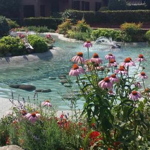 Il giardino intorno alla piscina