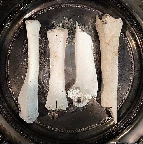 10-12cm Animal Bone