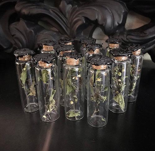 Dried Black Nightshade in 7cm vial