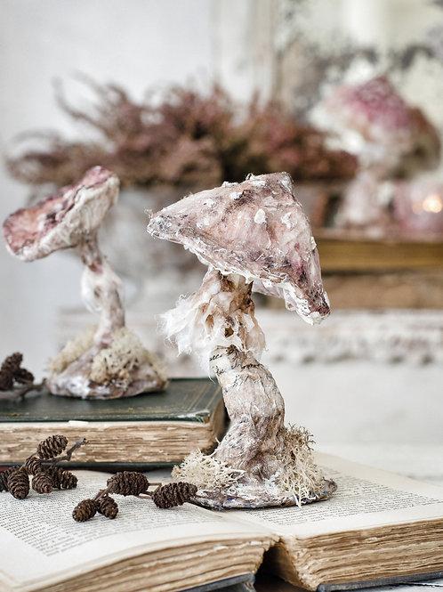 Dusky Pink Mushroom 1