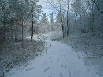 Sentier de neige.JPG