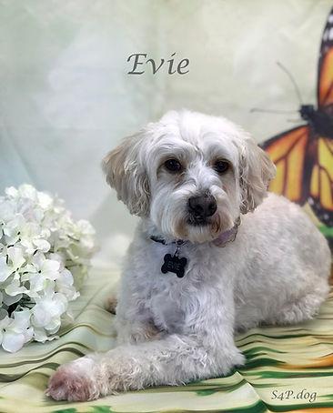 Evie 2.jpg