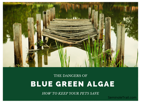 Blue-Green Algae: How to Keep Your Pets Safe