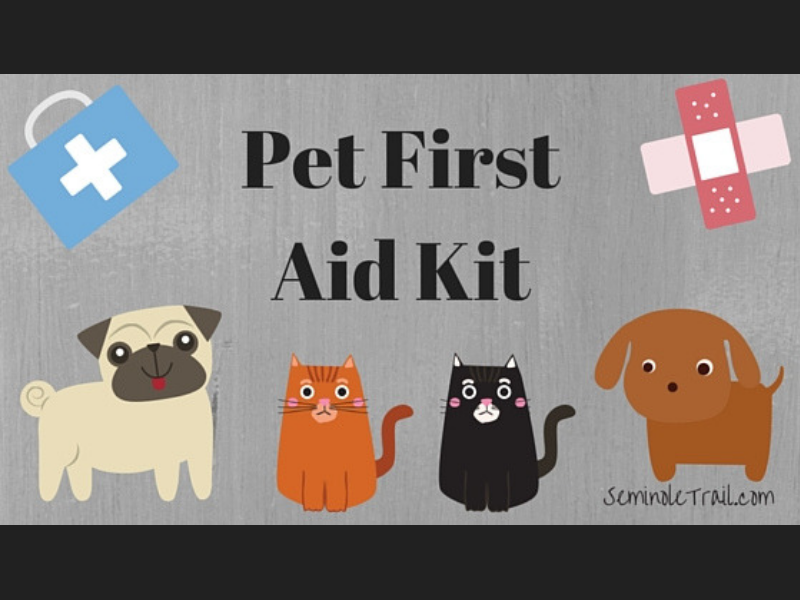 What do I need in a pet first aid or disaster kit? Seminole Trail Animal Hospital