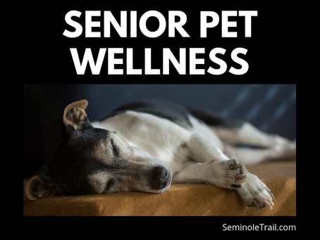 Taking Care of Your Senior Pet