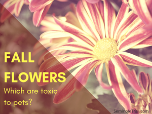 These common fall flowers and plants are toxic to dogs and cats. Best to know which plants are toxic to pets. Seminole Trail Animal Hospital