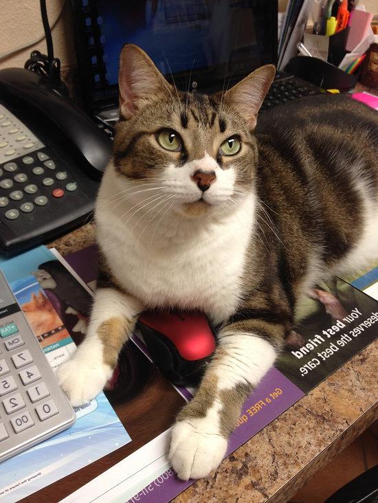 Manny computer cat.jpg