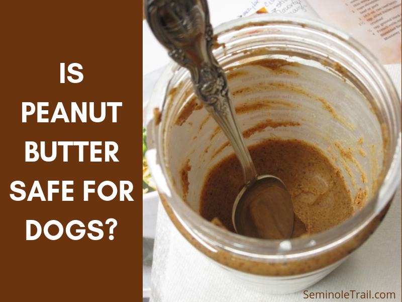 Is peanut butter safe for dogs? Can I give my dog peanut butter? Generally yes, in small quantities.