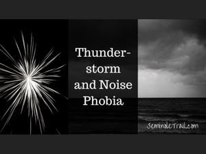 Thunderstorm and Noise Phobia in Dogs and Cats - Seminole Trail Animal Hospital