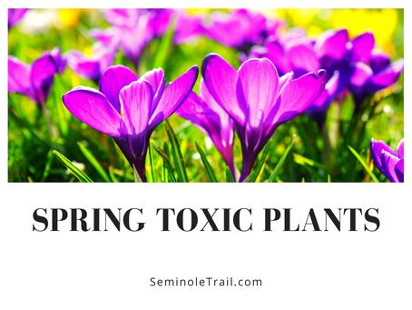 Spring Toxic Plants