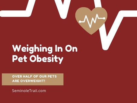 Weighing In On Pet Obesity