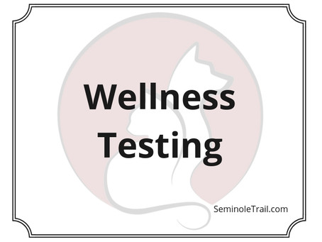 Video: Wellness Testing