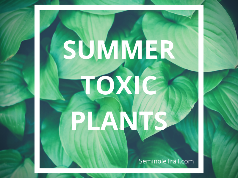 Summer Toxic Plants for dogs and cats