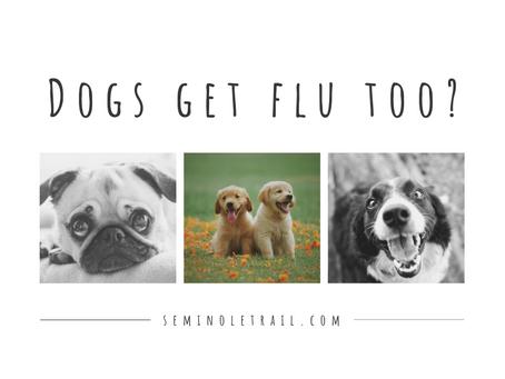 Dogs Get Flu Too!