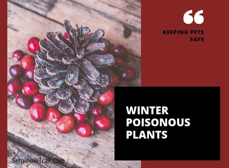 Winter Poisonous Plants