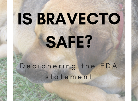 Is  Bravecto Safe for my Dog?