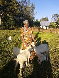 Goat project.jpg