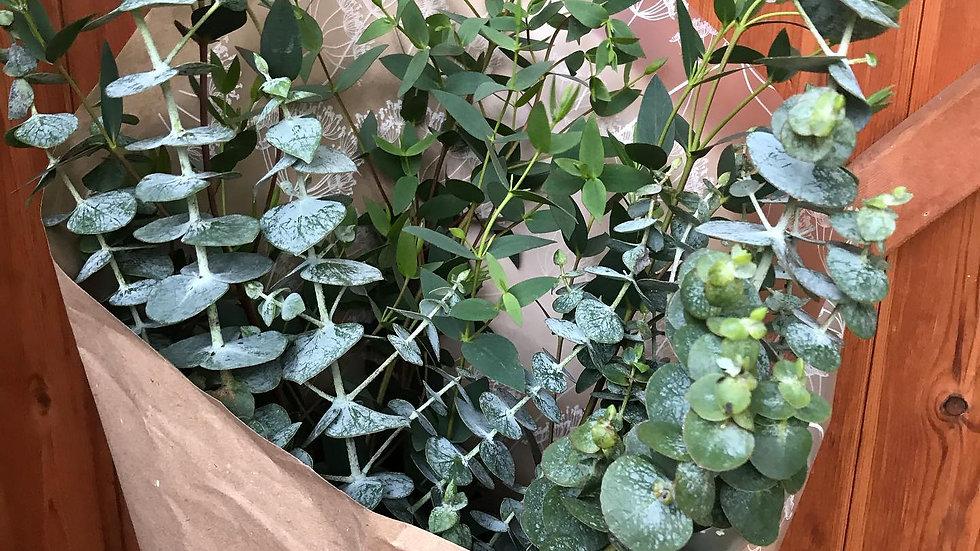 Eucalyptus Bouquets