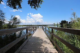 Boardwalk to Lake.jpg