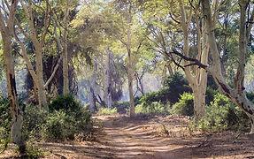 path in woods.jpg