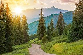 Sun thru Evergreens.jpg